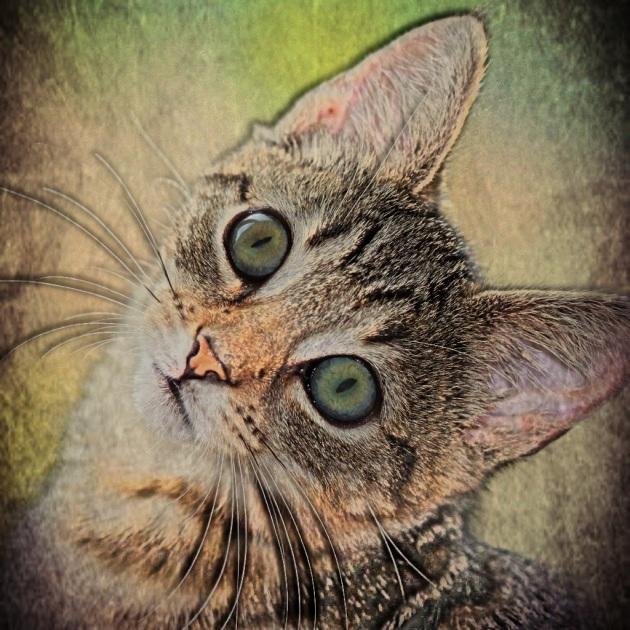 Paint FX Kitty